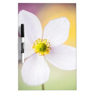 Color Wheel Dry Erase Board