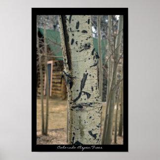 Colorado Aspen Trees Poster