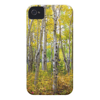 Colorado Backcountry Forest iPhone 4 Case-Mate Case