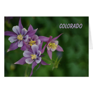 Colorado Blue Columbine All Occasion Greeting Card