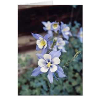 Colorado Blue Columbine Card