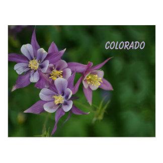 Colorado Blue Columbine Postcard