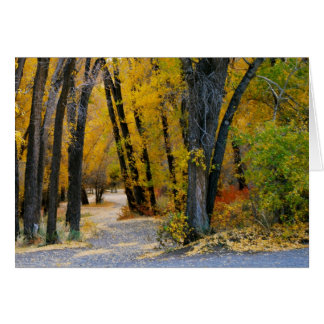 Colorado Blue Mesa Fall Colors Photo Note Card