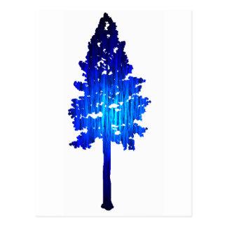 Colorado Blue Spruce Postcard
