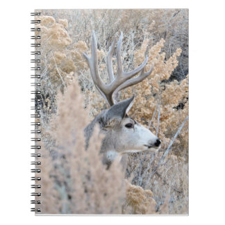 Colorado Buck Spiral Notebooks