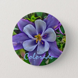 Colorado columbine button