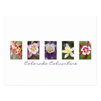 Colorado Columbine Collage Postcard