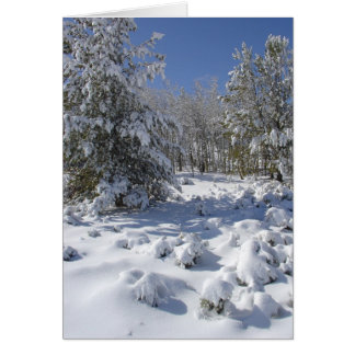 Colorado Forest Beauty Christmas Card