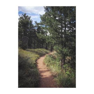 Colorado Mountain Path Canvas Print