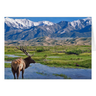 Colorado Rocky Mountains Elk Card