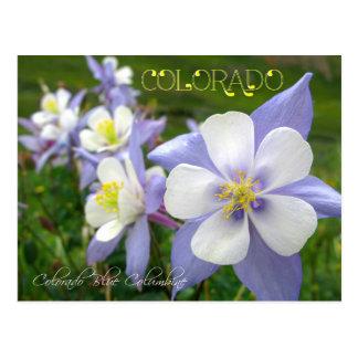 Colorado State Flower: Rocky Mountain Columbine Postcard
