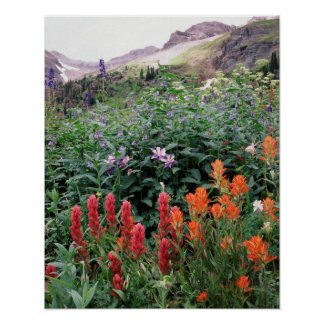 Colorado, Uncompahgre National Forest Poster
