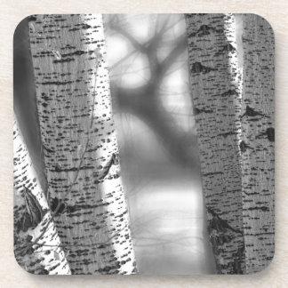Colorado White Birch Trees in Black and White Beverage Coasters
