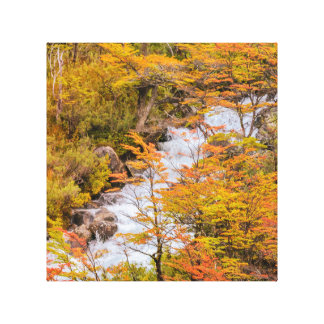 Colored Forest Landscape Scene, Patagonia Canvas Print