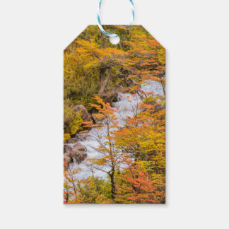 Colored Forest Landscape Scene, Patagonia Gift Tags