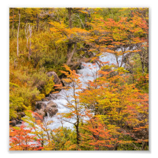 Colored Forest Landscape Scene, Patagonia Photo Print