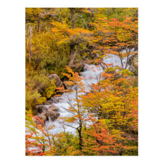 Colored Forest Landscape Scene, Patagonia Postcard
