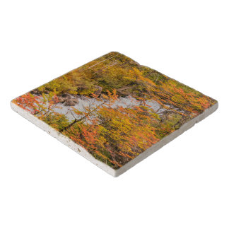 Colored Forest Landscape Scene, Patagonia Trivet
