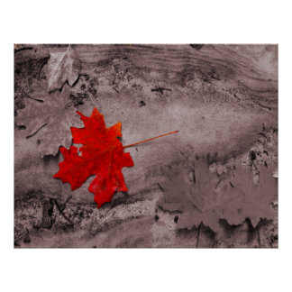 Colored Leaf on Black and White Photo Poster