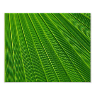 Colorful abstract green palm leaf photo print