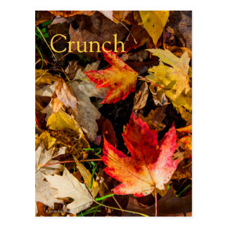 Colorful and Noisy Autumn Leaves Postcard