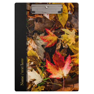 Colorful Autumn Afternoon Clipboards