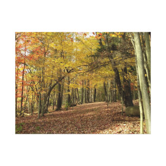 Colorful Autumn Foliage Canfield Ohio Canvas Print