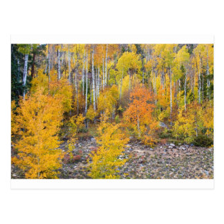 Colorful Autumn Forest In The Canyon of Cottonwood Postcard