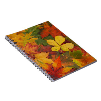 Colorful Autumn Spiral Notebook