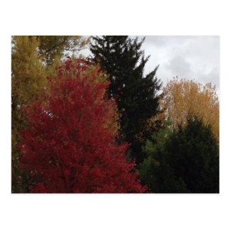 Colorful Autumn Trees Photo Postcards