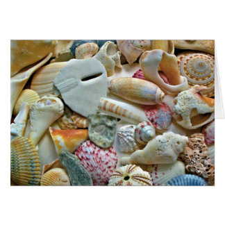 Colorful Beach Shells Blank Note Card