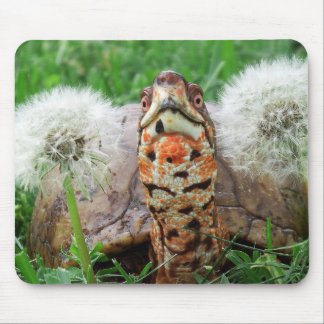 Colorful Box Turtle Mouse Pad