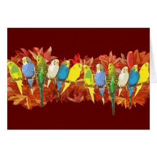 Colorful budgies pattern card