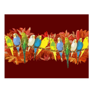 Colorful budgies pattern postcard