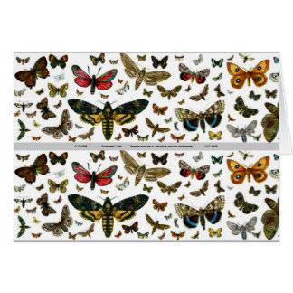 Colorful Butterflies Antiquarian Image Bookmark Card
