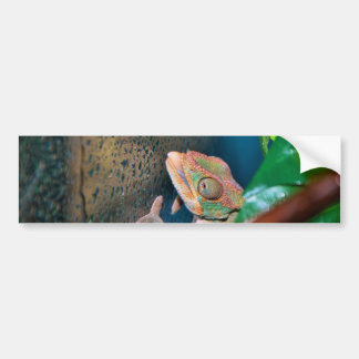 Colorful Chameleon on a Glass Wall Bumper Sticker