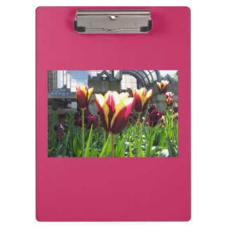Colorful City Tulips Clipboard