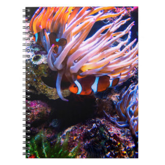 Colorful Clown-Fishes Notebook
