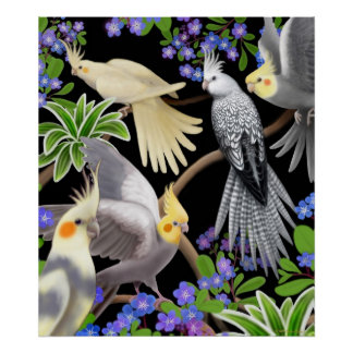 Colorful Cockatiels Poster