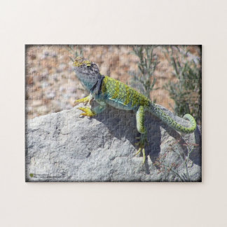 Colorful Collared Lizard On A Rock Jigsaw Puzzle