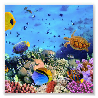 Colorful Coral Reef Critters Photo Print