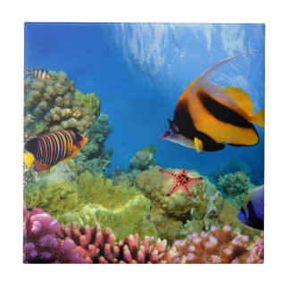 Colorful Coral & Tropical Fish Tile