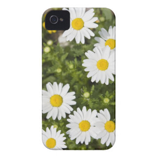 Colorful Daisies iPhone 4 Cover