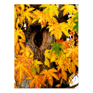 Colorful Fall Leaves & Tree Trunk Postcard