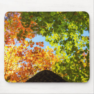 Colorful Fall Trees Mouse Pad