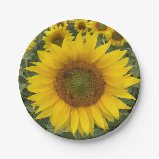 Colorful Floral Yellow Sunflowers Harvest Paper Plate