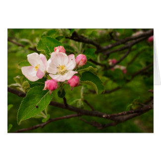 [Colorful Flowers] Apple Blossom  - Any Occasion Card