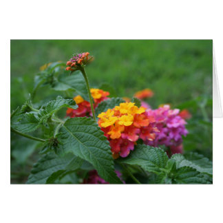 [Colorful Flowers] Lantana camara - Any Occasion Card