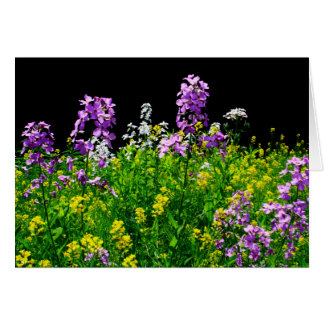 [Colorful Flowers] Wildflower Field - Any Occasion Card