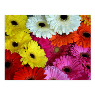Colorful gerber flowers postcard